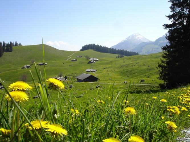 Alpwirtschaft Alp Tschuggen