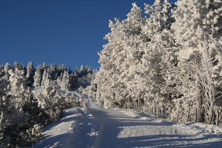 Randonnée d'hiver Guggisberg