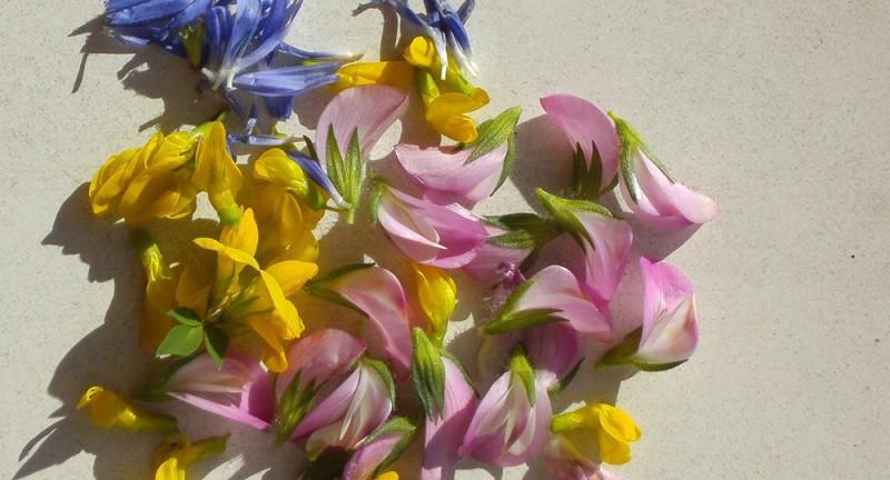 Kräuterwanderung Wiesenblumen