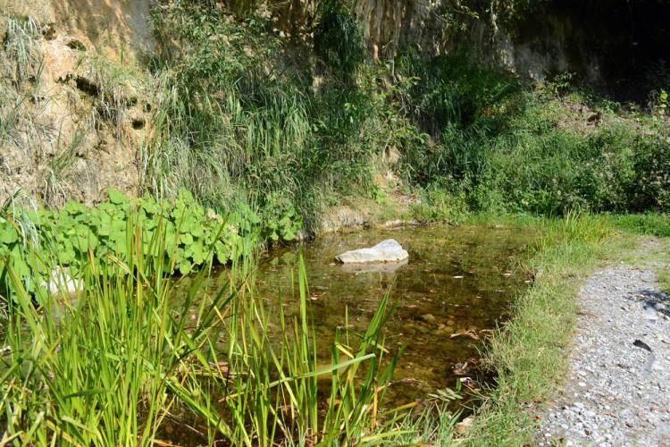 Glögglifrosch-Teich