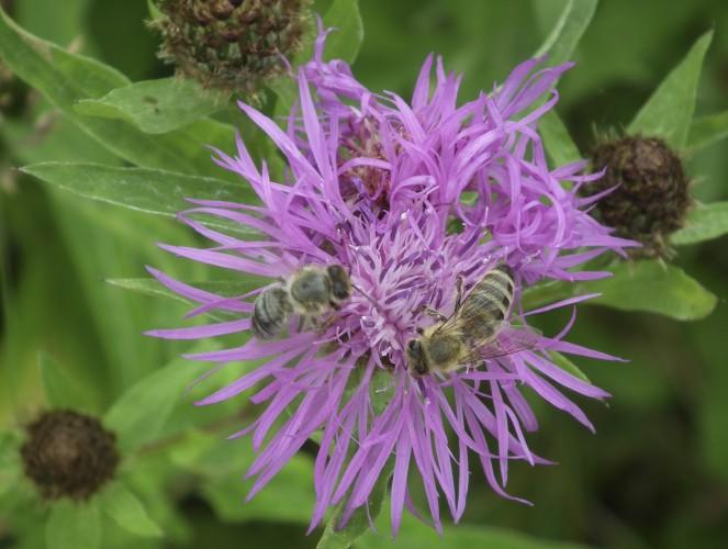 Insektenförderung & ökologische Aufwertung im eigenen Garten