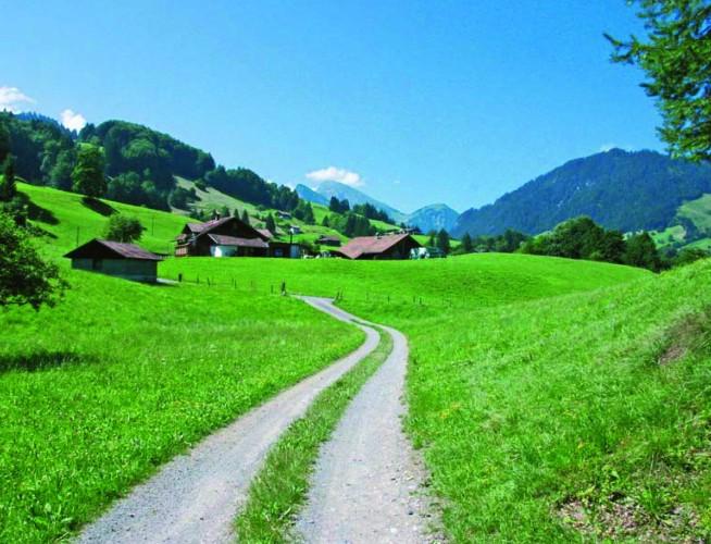 Alpenbockweg - Rosalia Alpina