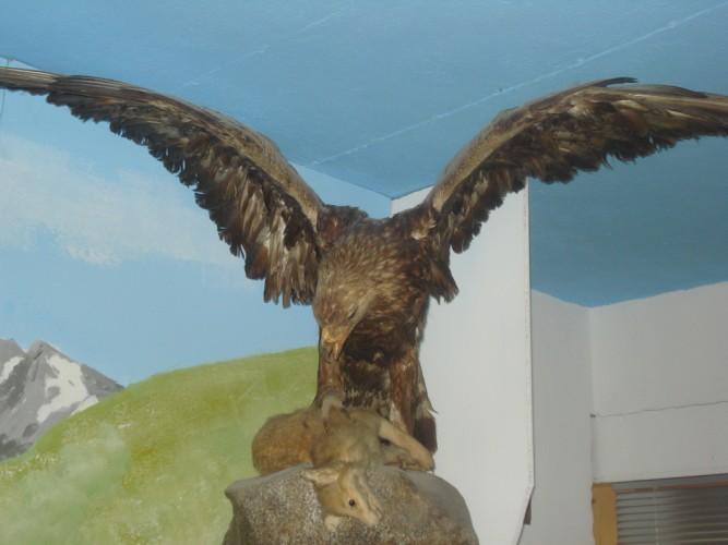 Tiermuseum in Blitzingen
