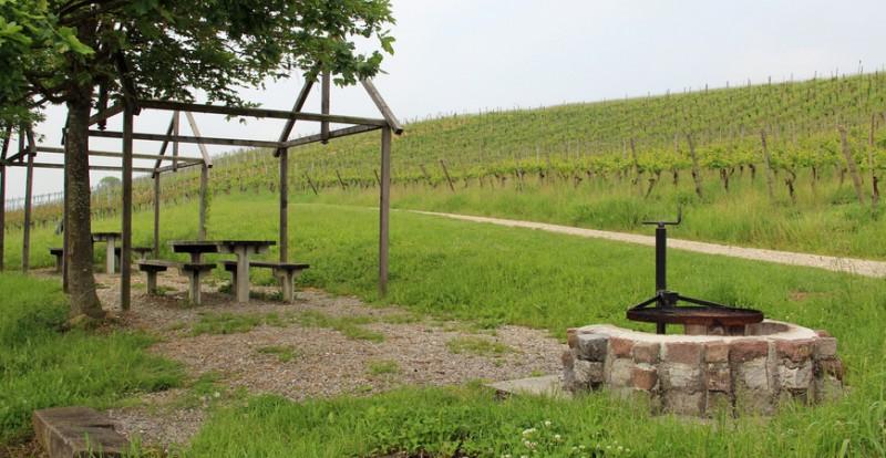 Trasadinger Weinwanderweg