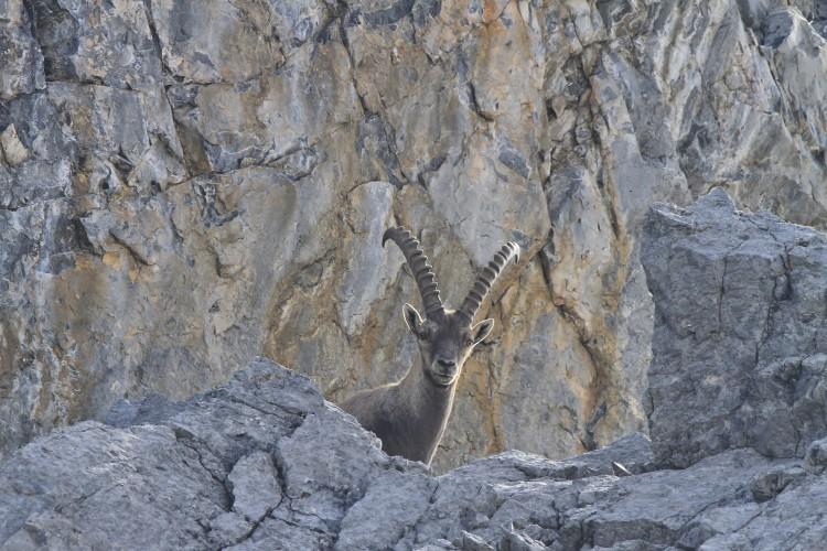 Wildtierbeobachtung - Erlebnisangebot