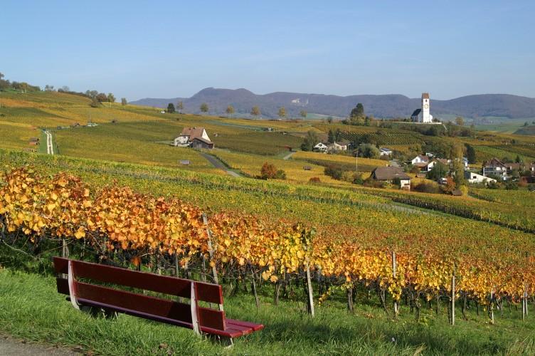 Vignoble de Klettgau