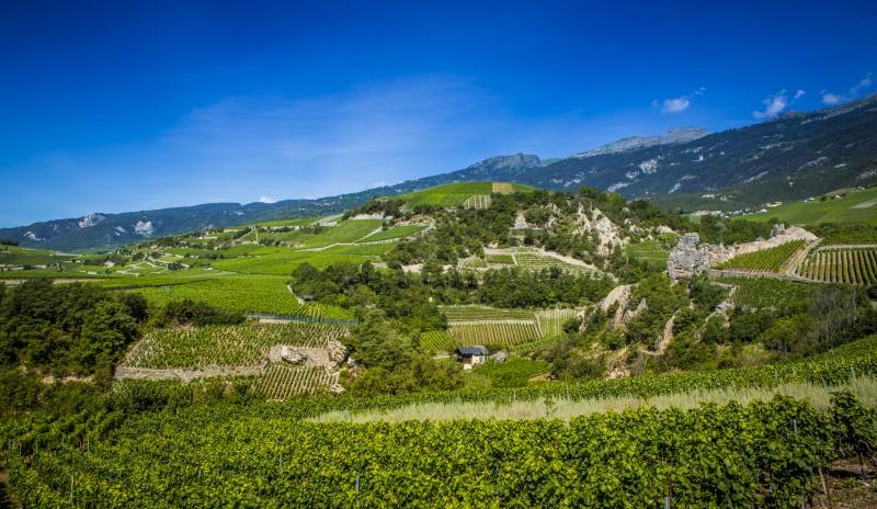 Tous les partenaires viticoles du Parc naturel Pfyn-Finges.