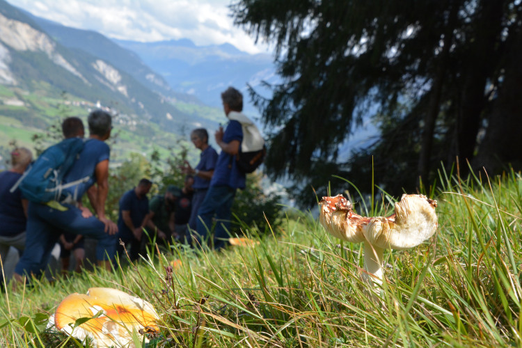 Pilzwochenende in Bivio - © Seraina Giovanoli-Trenkwalder