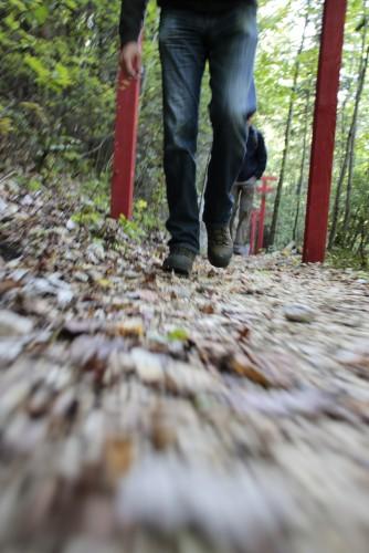 Holzweg: Geführter Rundgang