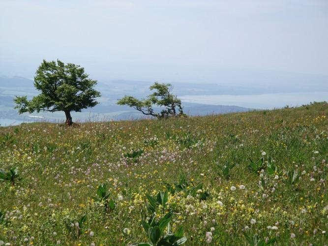 Natura Trail Chasseral - 1