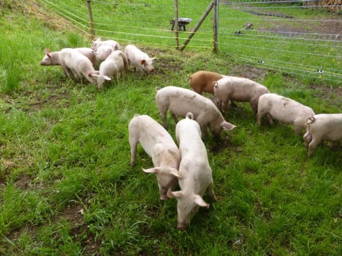 Schweinelehrpfad Wittnau