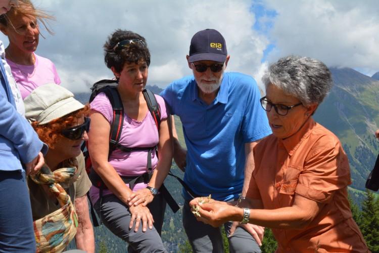 Chrütliwanderung Alpenflora der Val d'Err - Motta d'Err