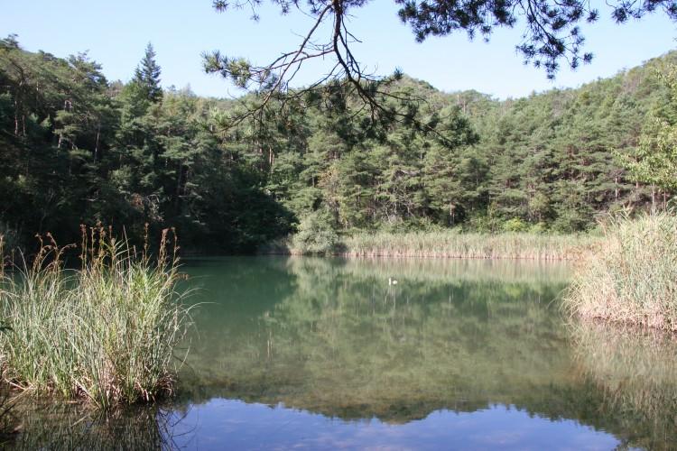 Zona protetta del Pfynwald