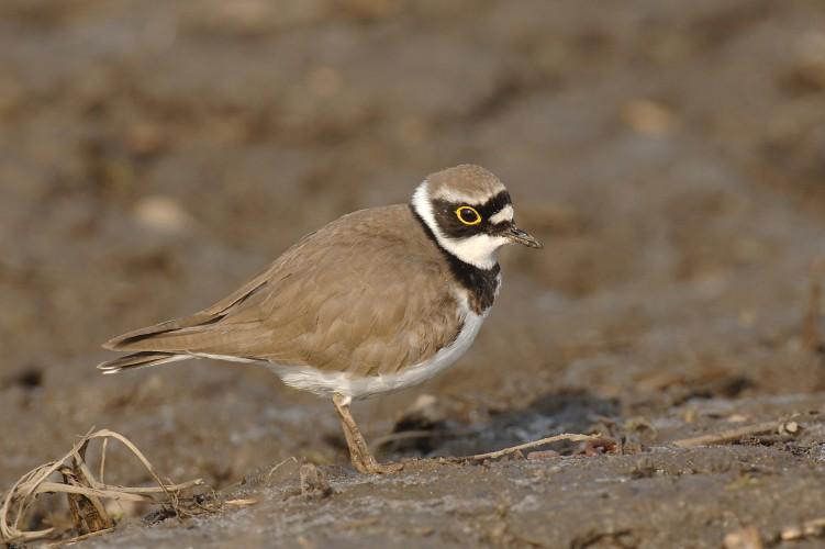 Birds of Rottensand