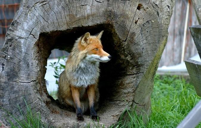 Tieranlage Fuchs