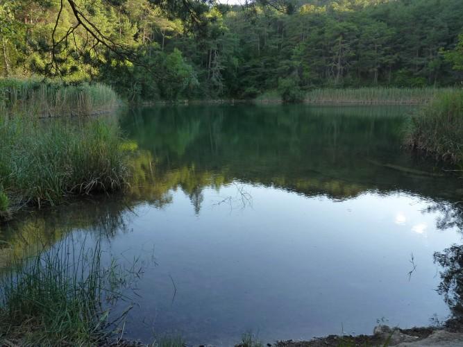 Les libellules du site protégé du Bois de Finges
