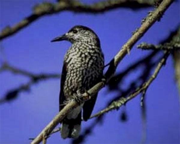 Nacht der Vögel