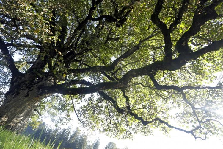 Exkursion Keltische Bäume auf dem Kulturweg