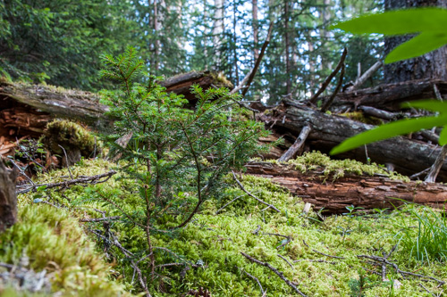 Naturama-Vortrag Wildnis