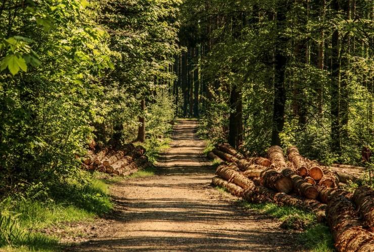 La forêt à deux visages