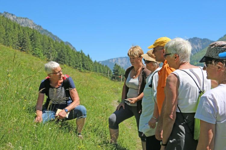 Exkursion Wildkräuter im Alpenraum
