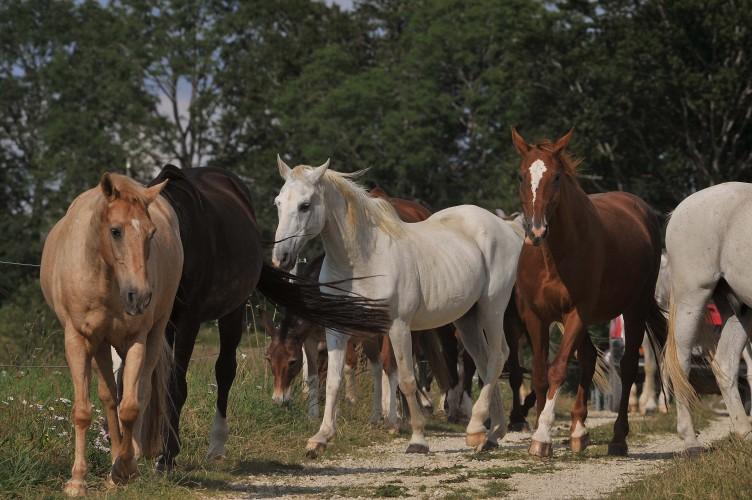 Fondation pour le cheval