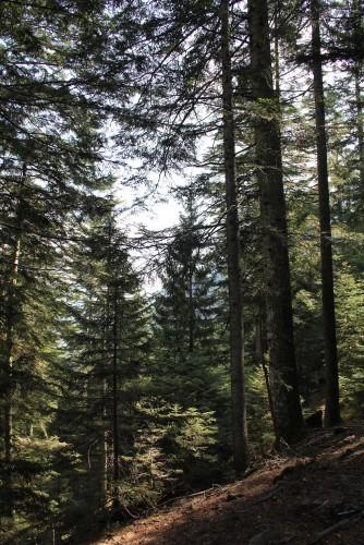 Réserve d'Onsernone: la forêt