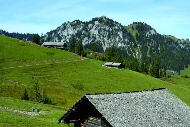 Alpwirtschaft Alp Menigen