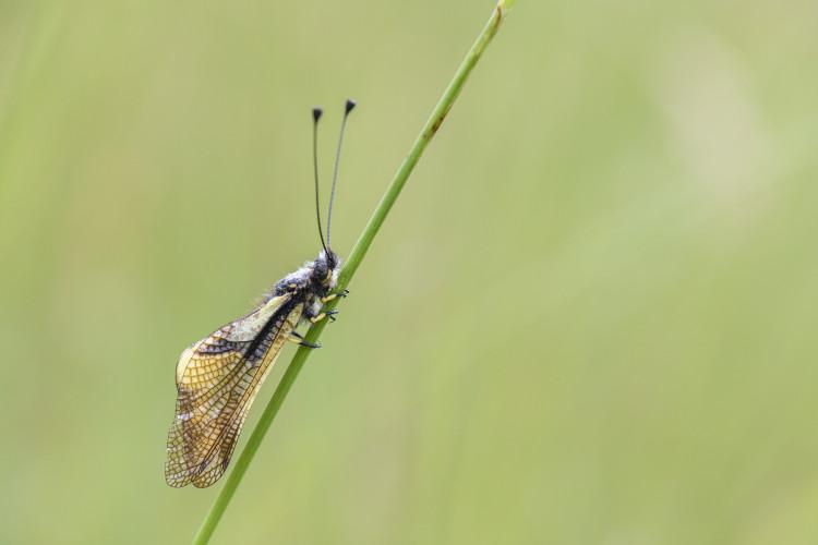 Parc Ela-Sommerreihe: Welt der Insekten - © lorenzfischer.photo