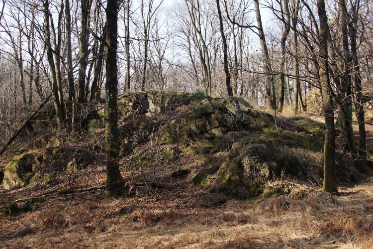 Réserve Maia: forêt ancienne