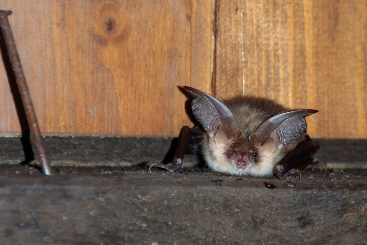 Exkursion Naturpilotin Fledermaus