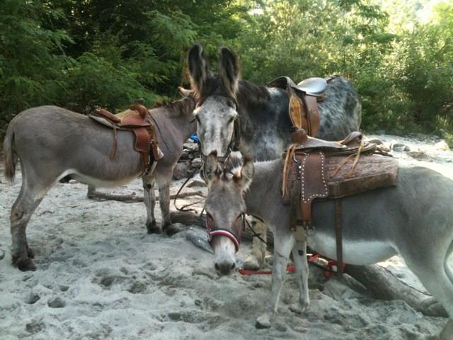 Spaziergang mit Eseln