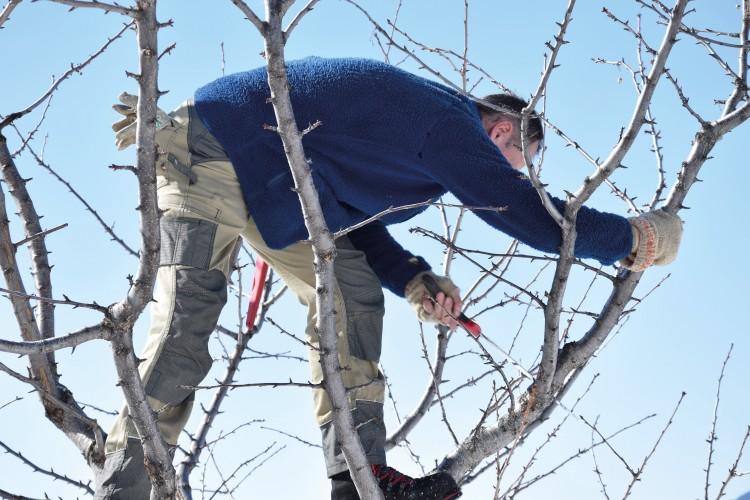Hochstamm-Obstbäume