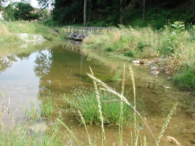 Amphibien-Biotop Höfli