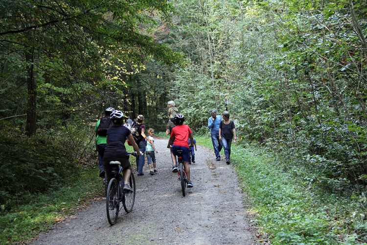 Rundtour Langenberg–Sihlwald