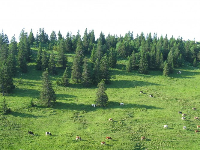 Natura Trail Chasseral - 2