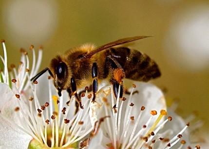 Das Thal, wo der Honig fliesst