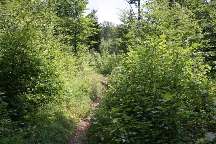 Sentier du Bas des Côtes