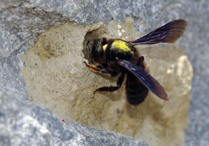 Produkte von Honigbienen