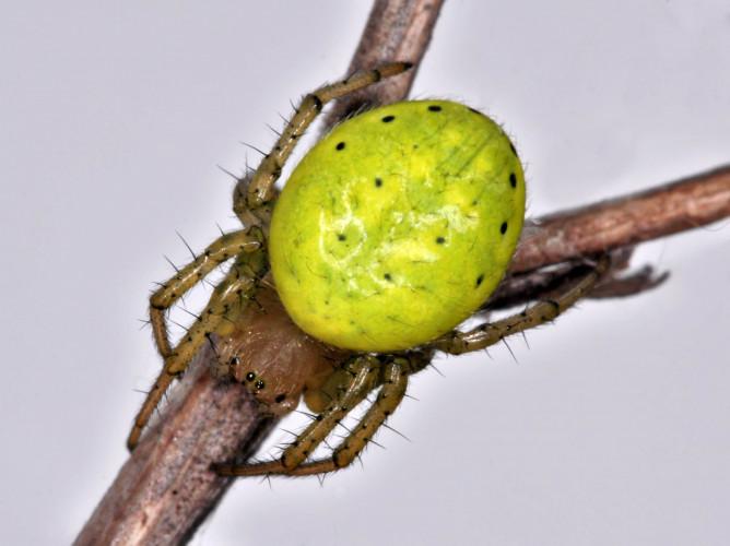 Geosommer Alp Flix: Führung Spinnen und andere Wirbellose - © Dragisa Savic