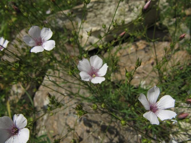 Botanische Wanderung