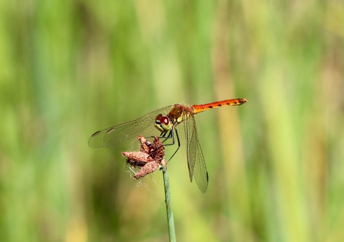 Les insectes dans les étangs