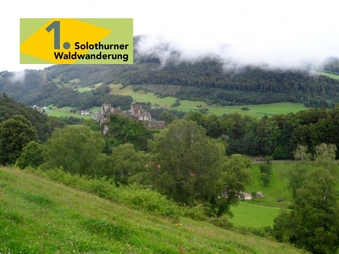 1. Solothurner Waldwanderung