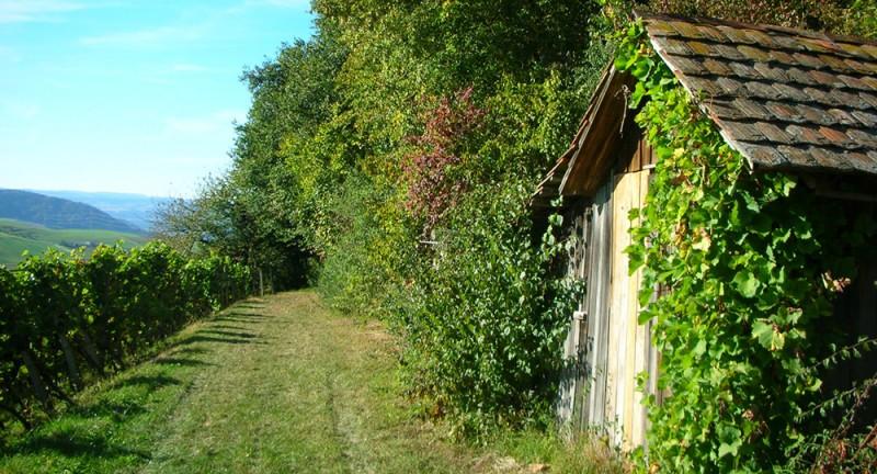 Auf dem Flösserweg von Laufenburg nach Hottwil