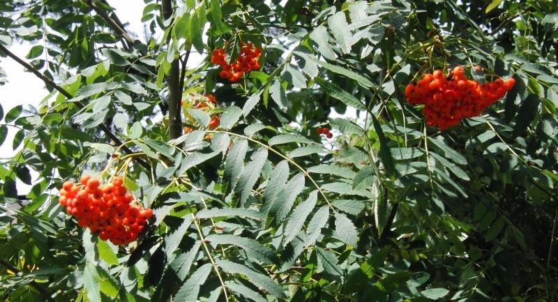 Kräuterwanderung - Essbare Wildpflanzen in Wald & Wiese