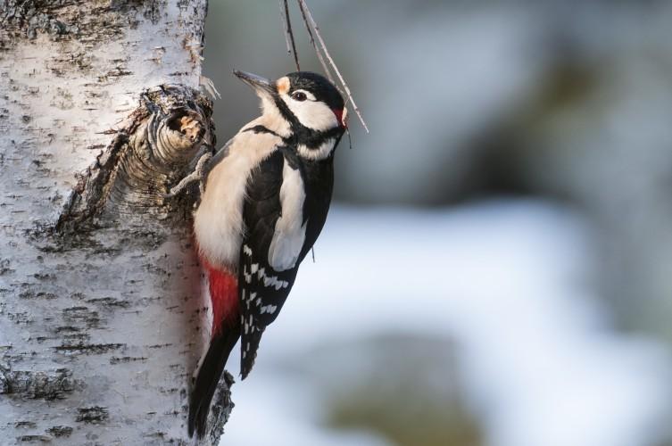 Vögel im Auenwald
