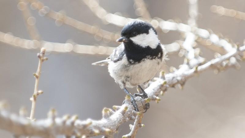 Bestandsentwicklung Brutvögel