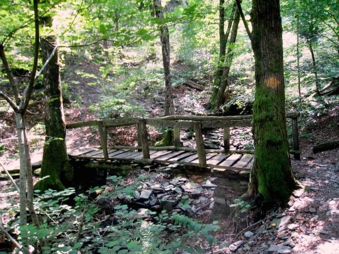 Waldreservat Maia: die Erle
