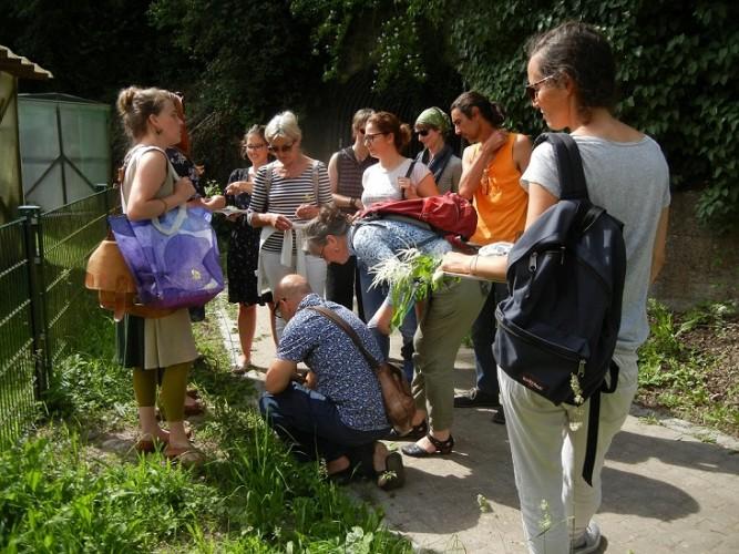 Unkraut – Heilkraut – Wildgemüse am Rhein