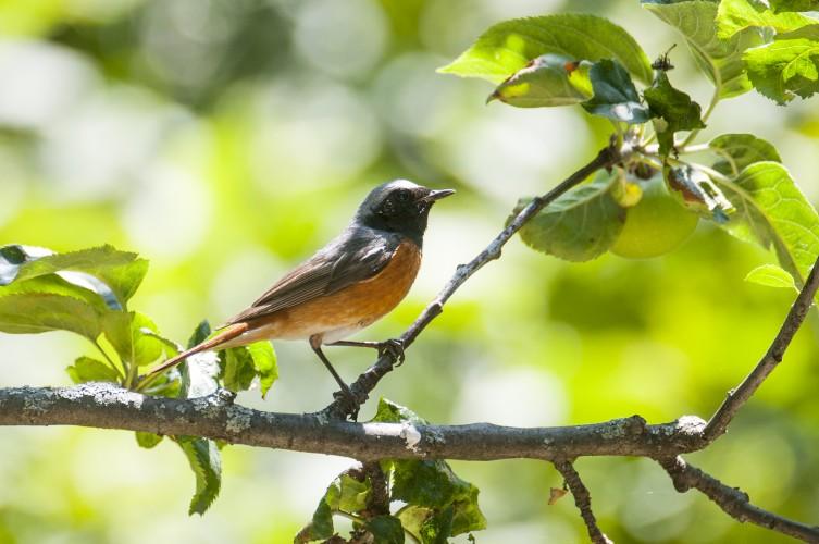 Vögel der Trockensteppe